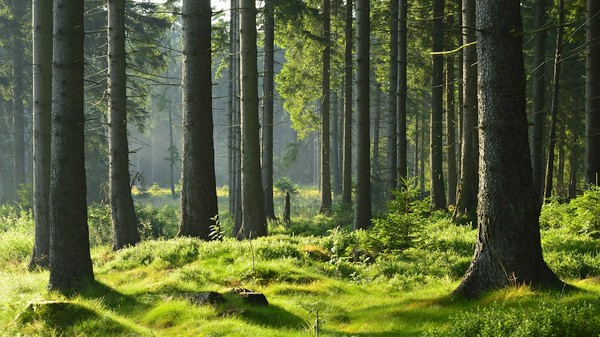 One Day a Forest Could Store All of Humanity's Knowledge
