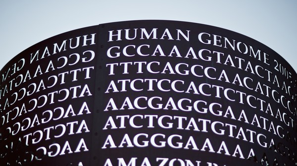 The Genome's Big Data Problem