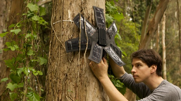 A Network of Recycled Phones Is Listening for Illegal Logging in the Rainforest