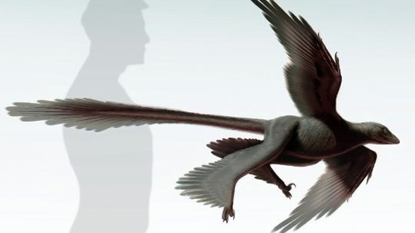The Largest Flying Dinosaur Was a Four-Winged Raptor