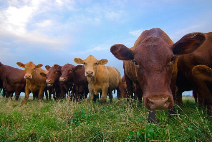 Raising Beef Uses 28 Times More Land Than Other Meats
