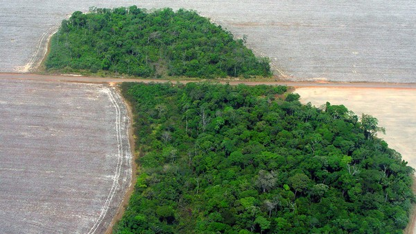 To Fight Climate Change We Need to Protect the People Who Live in the Rainforest