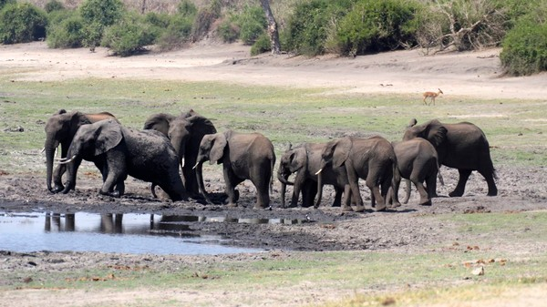Poachers Killed 8 Percent of All African Elephants in 2011