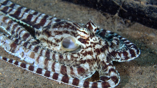 ​This Next-Gen Cloaking Material Is Made of Synthetic Octopus Skin