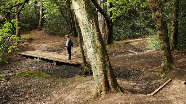 The Japanese Have an Entire Field of Research Devoted to Chillin' in the Forest