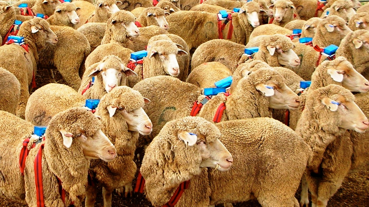 The Mathematics of Herding Sheep