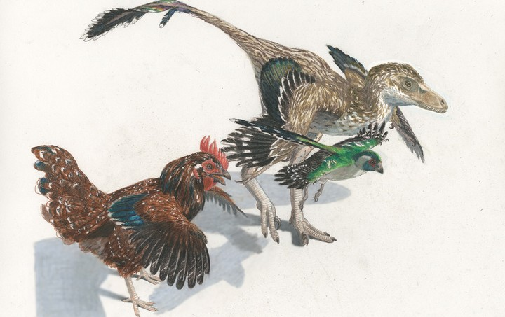 Birds Evolved From Dinosaurs In a 'Supercharged' Evolutionary Surge