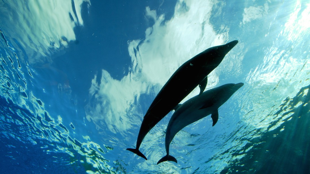 Dolphins Can Detect Magnetic Fields with Their Dolphin Supersenses