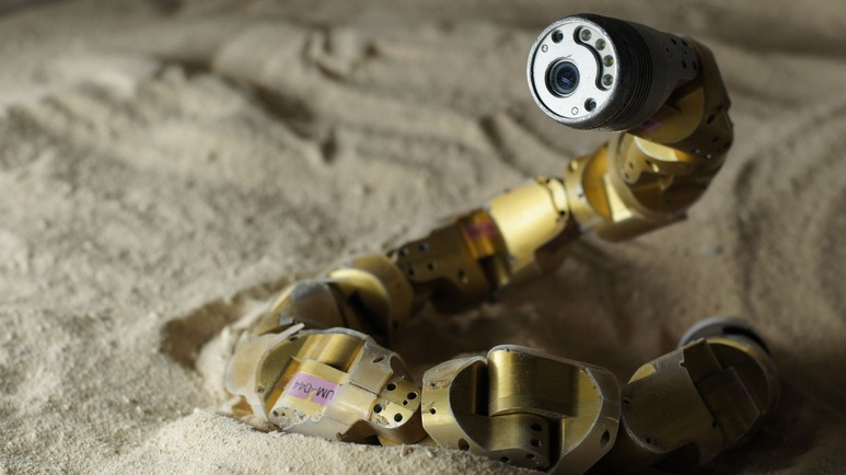 This Robo-Snake Learned How to Climb Sand Dunes From Real Snakes