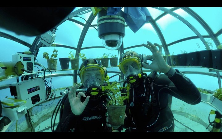 Underwater Agriculture: The Scuba Divers Growing Crops in Bubbles Under the Sea