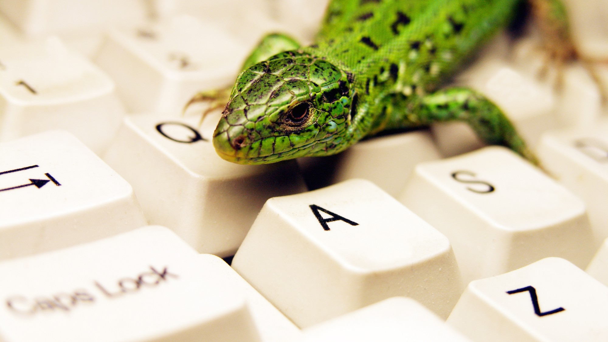 Hackers 'Lizard Squad' Just DDoSed the UK's National Crime