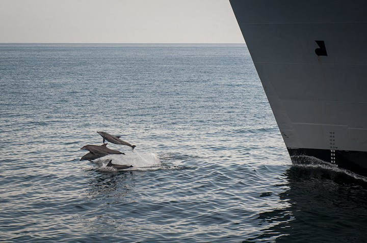 The Navy Is Still Making Dolphins Deaf, Despite What You May Have Heard