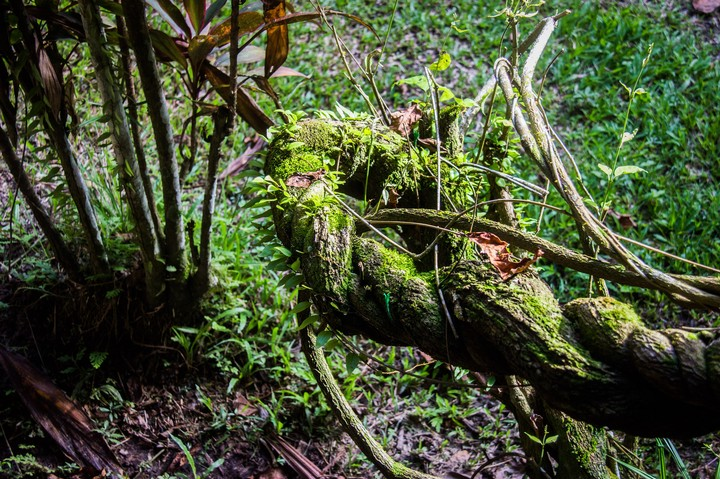 Ayahuasca: a Possible Cure for Alcoholism and Depression