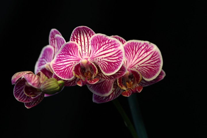 The Black Market for Orchids Is Moving to Social Media, Study Says