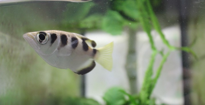 Oh My God, Fish Can Recognise Human Faces