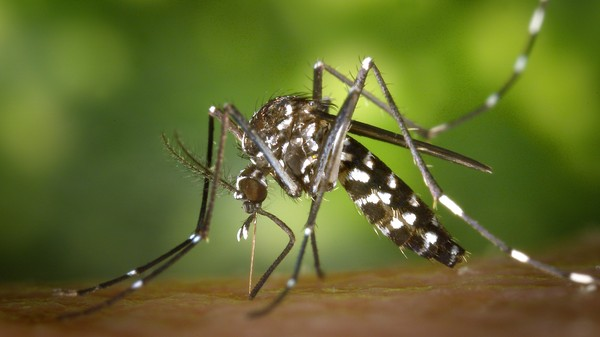 Millions of Cases of Dengue Fever Are Going Unreported in India