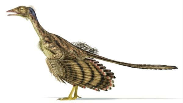 What Colors Were Dinosaur Feathers?