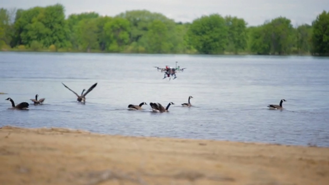 This Dive-Bombing Drone Scares the Shit Outta Geese