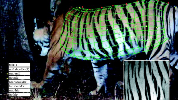A Tiger Stripe Database Is Tracking India's Killer Cats