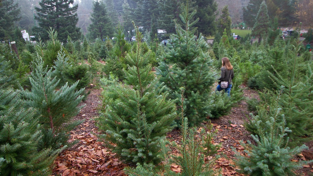 The Technological Battle for a Better Christmas Tree - Motherboard