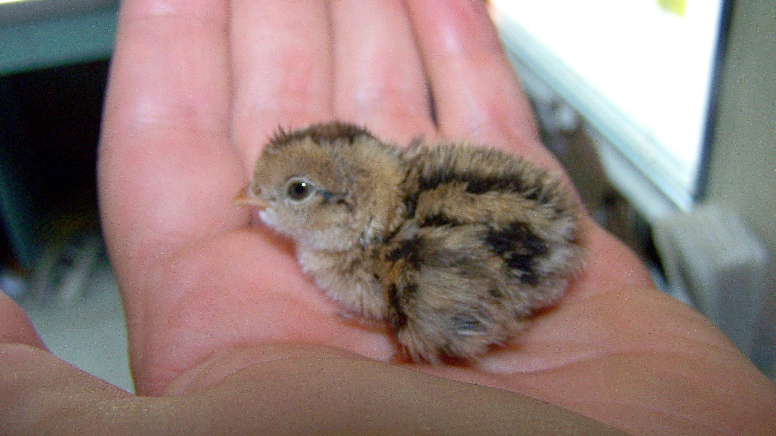 what to do when you find a baby bird on the ground motherboard