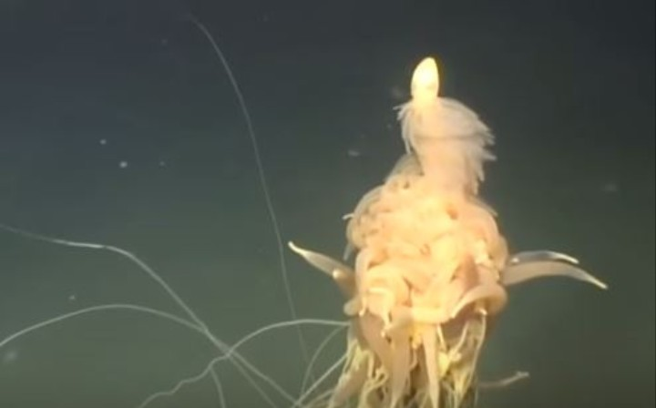 This Deep-Sea Creature is Creepy As Hell
