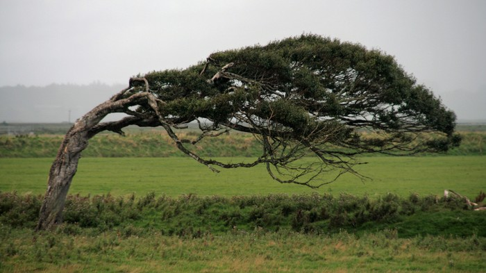 Engineers Devise a Way to Harvest Wind Energy from Trees
