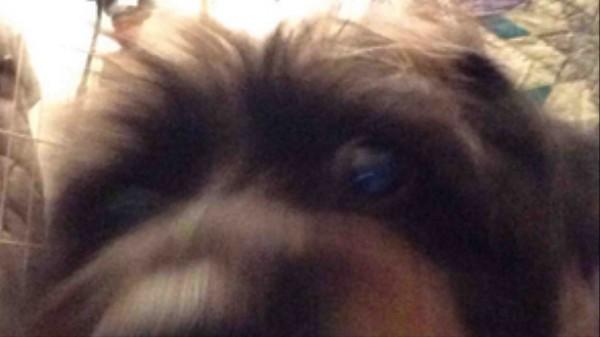 Dogs Take Selfies Too