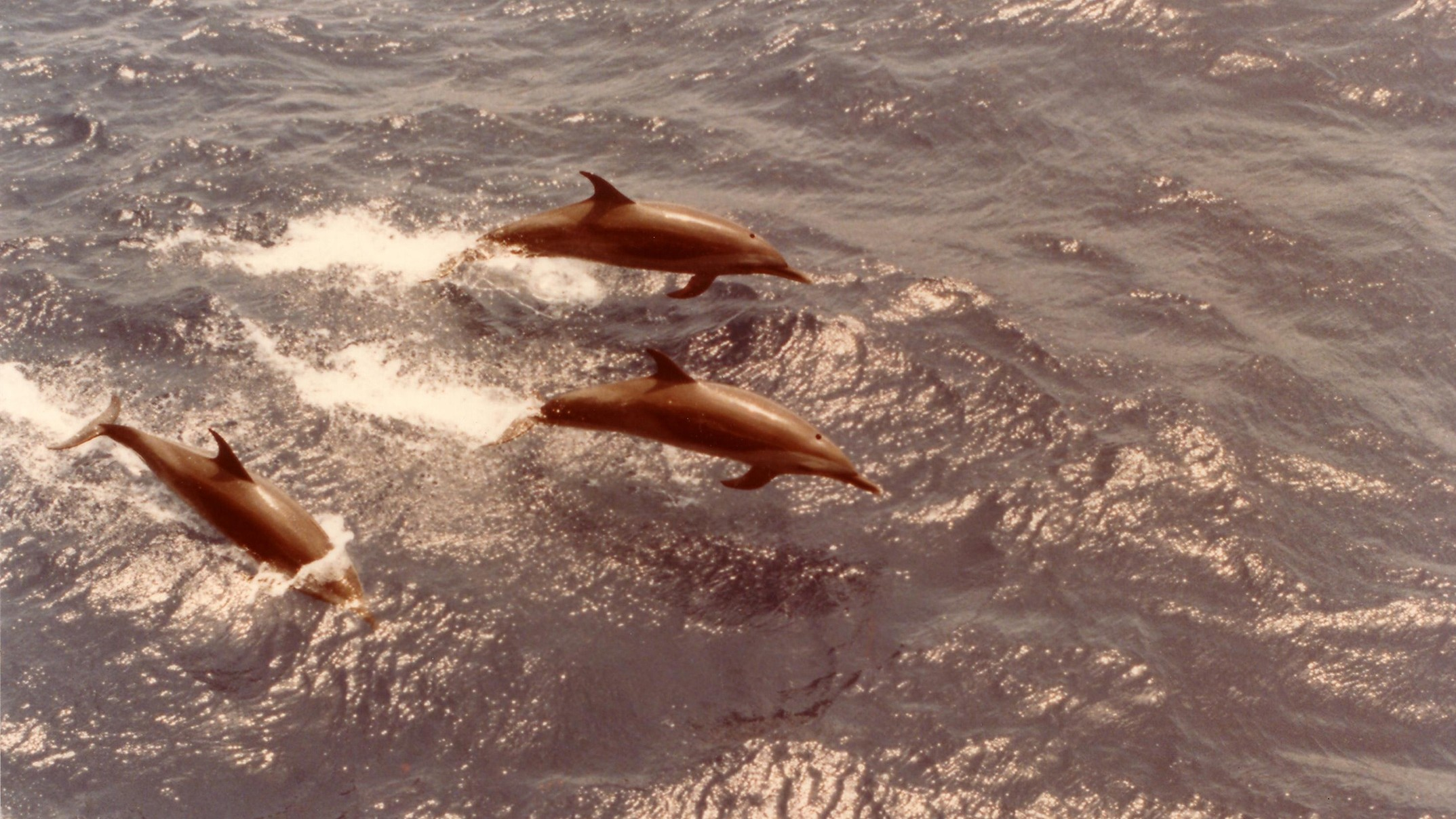 Dolphins Deserve the Rights of Non-Human Persons, Says Romanian Politician