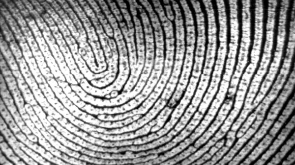 Forget Dongles And Passwords, The Future Of Mobile Payments Is Biometrics