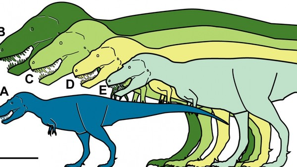 What Tyrannosaurus Rex's Dwarf Cousin Says About Climate Change
