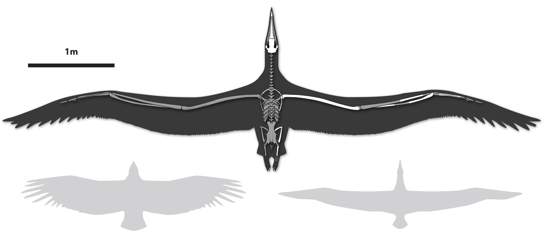 The Biggest Bird That Ever Flew - Motherboard