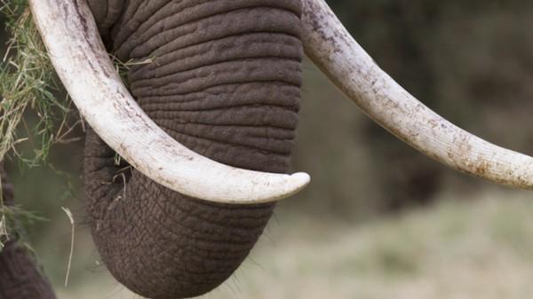 Kenia wil de ivoorstroperij stoppen met behulp van drones