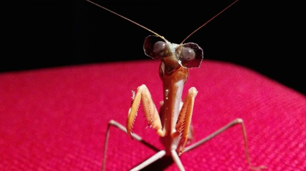 Insects With Tiny Glasses Could Help Robots See in 3D