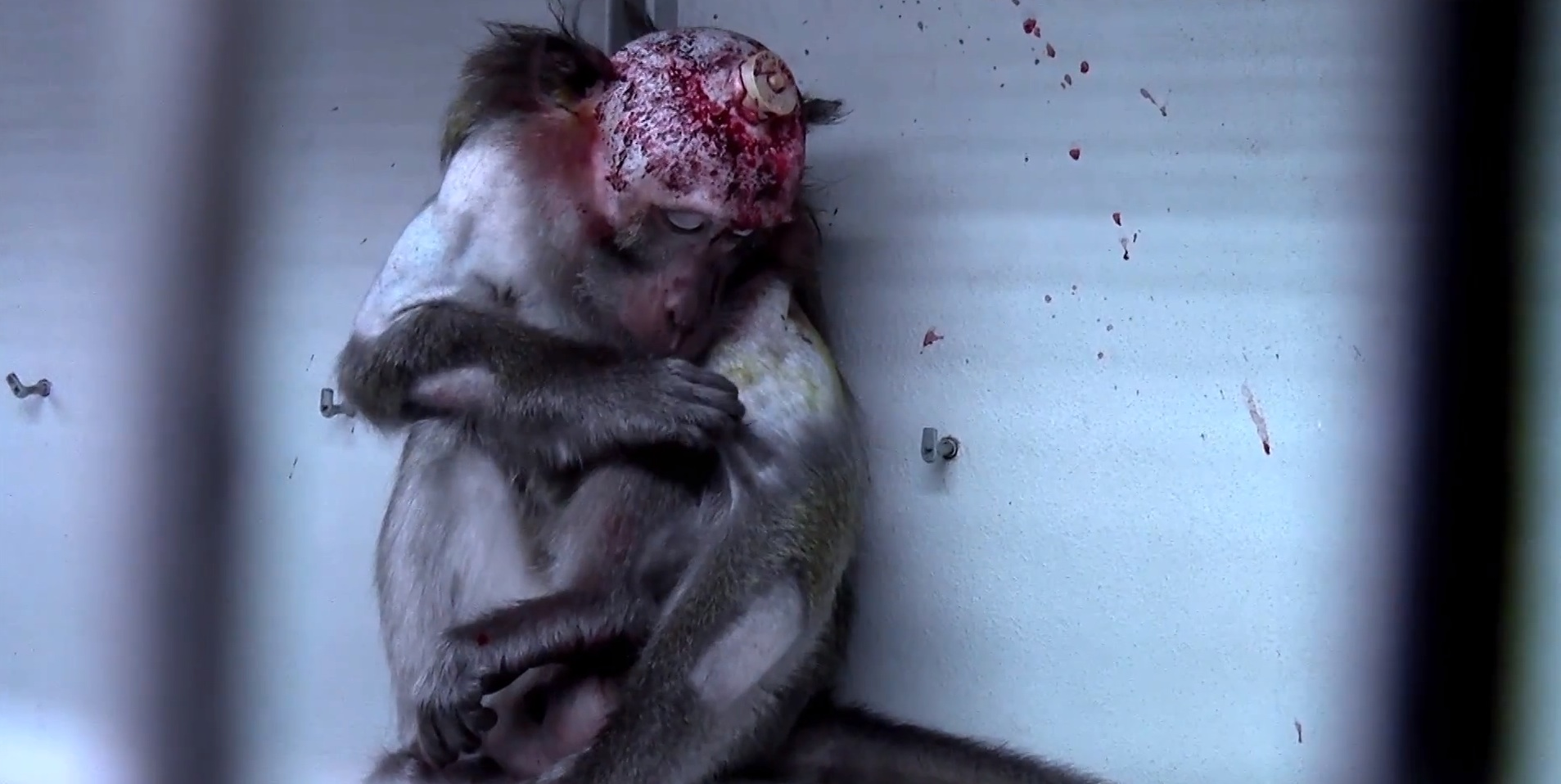 vivisection animal testing pros Twenty-five to thirty-five million animals are spared in the usa each year for the  purpose of research, testing, and education although vivisection serves as an.
