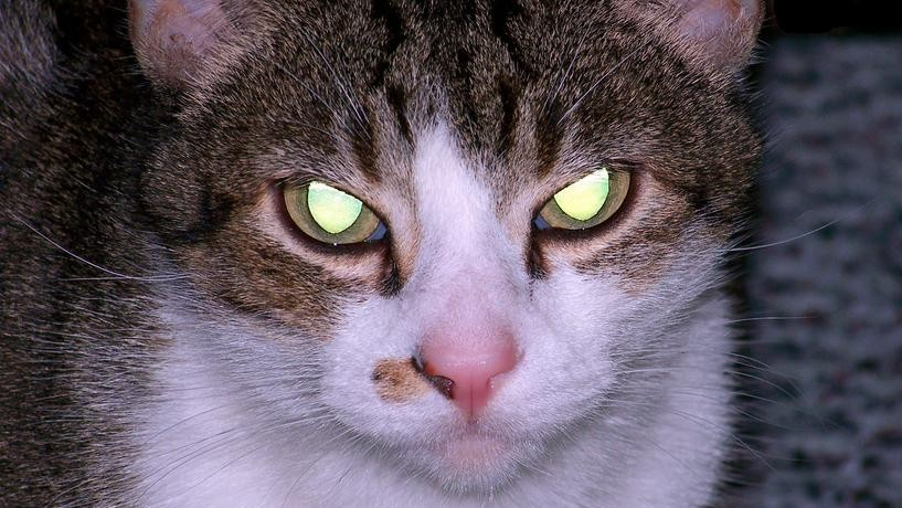 Can We Stop Worshipping Cats, Because They're Evil as Hell