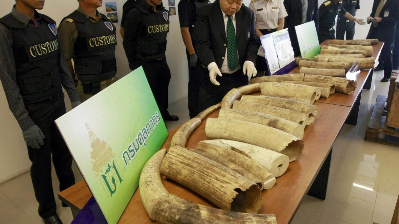 Good News for Elephants: Thailand Will Ban Its Domestic Ivory Trade