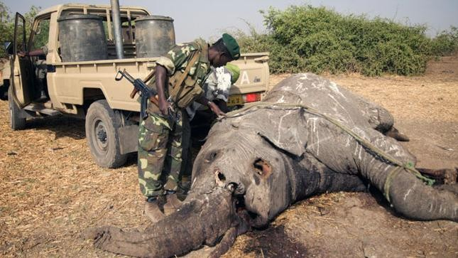 The Countries Fueling the Ivory Trade Must Stop Poaching or Face Sanctions