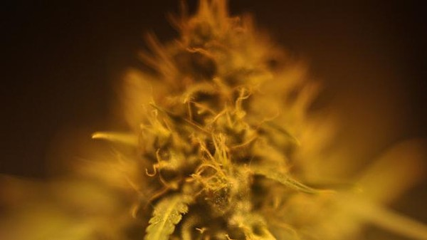 Is Weed Getting Too Good?