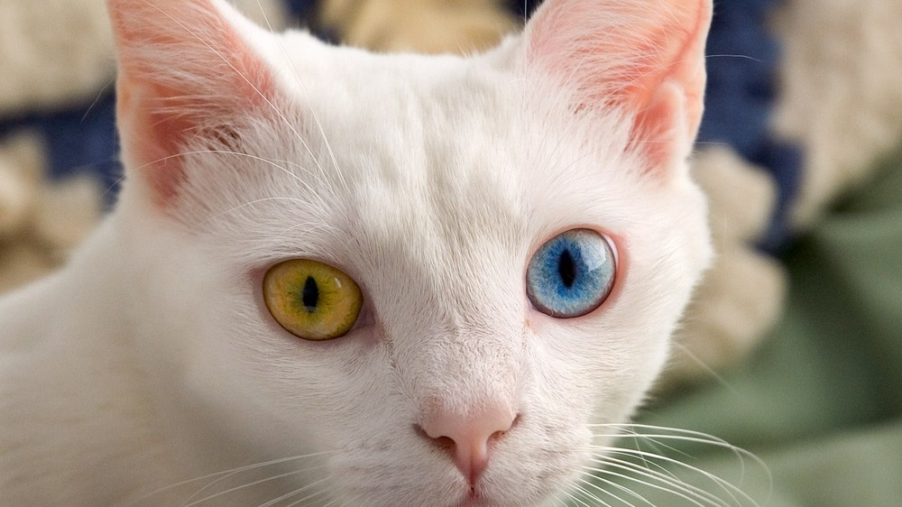 Cats May Be Aliens Spying on Us