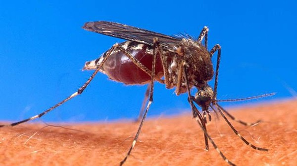 A New System Could Predict Deadly Dengue Outbreaks Four Months in Advance