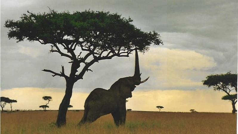 Drones Are Flying Above Rhinos and Elephants, But It's Not Yet Clear They Help