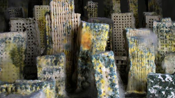 Zie hier hoe een stad gemaakt van brood wordt opgegeten door schimmels