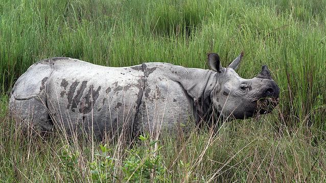 Nepal Convicted 13 Rhino Poachers Four Years After the Act