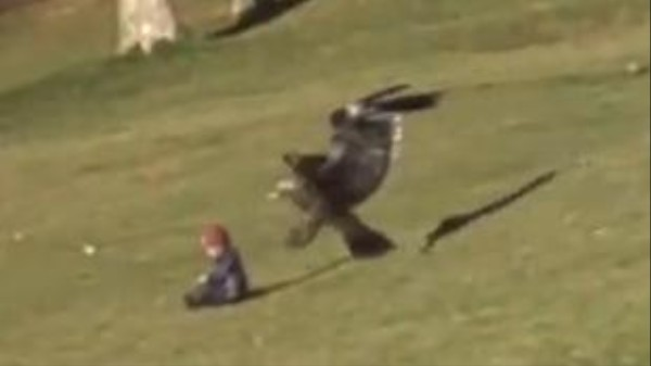 The Eagle-Snatching-Baby Video Is Insane, But It's Also Fake (Update!)