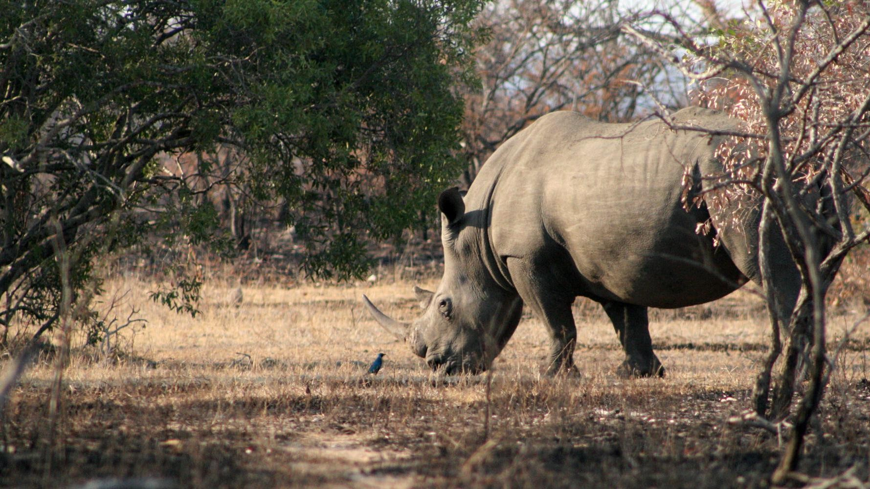 A South African Rhino Farmer Is Trying to Buy U.S. Drones to Fight Poachers