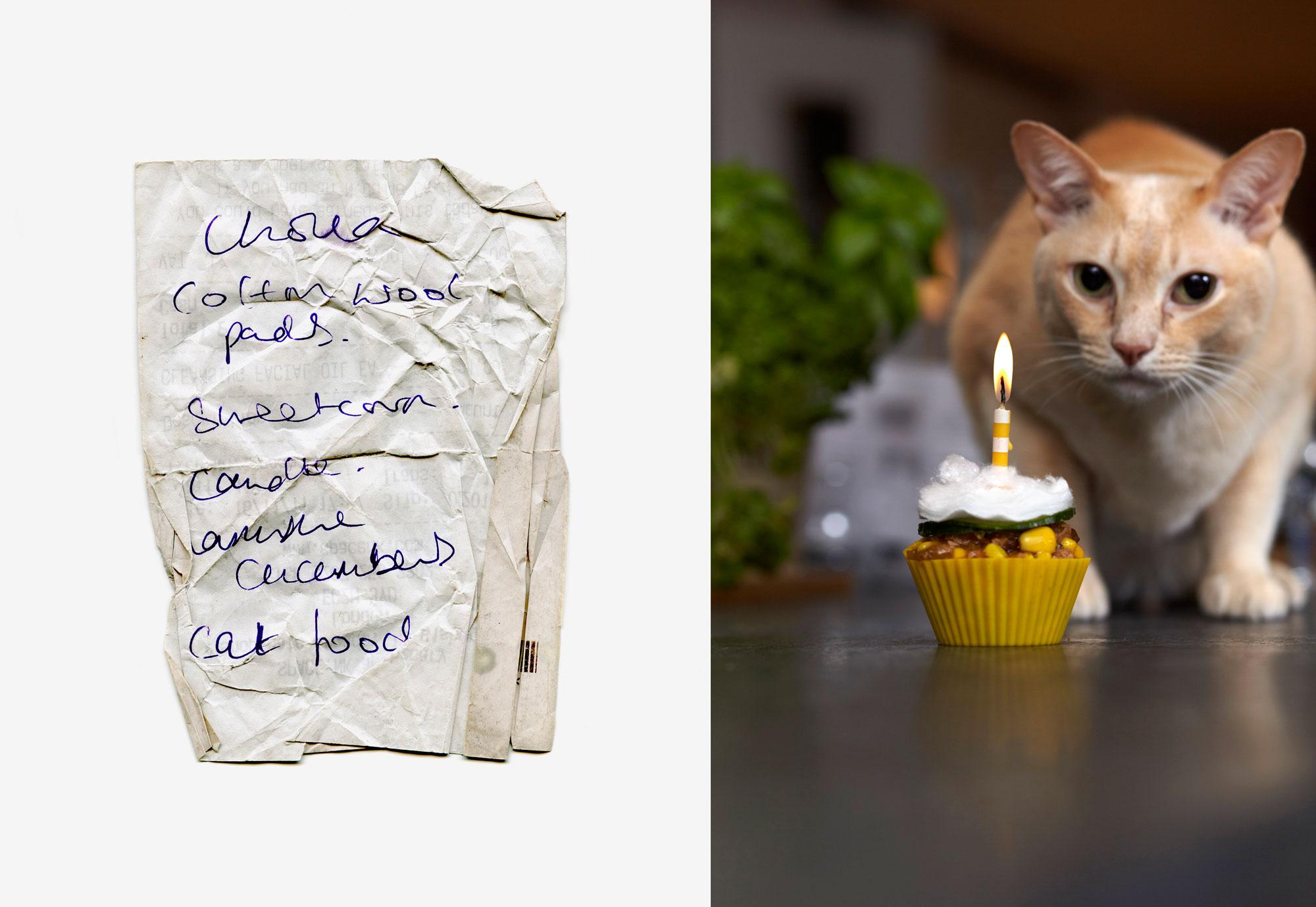 CAT-FOOD-CUPCAKE