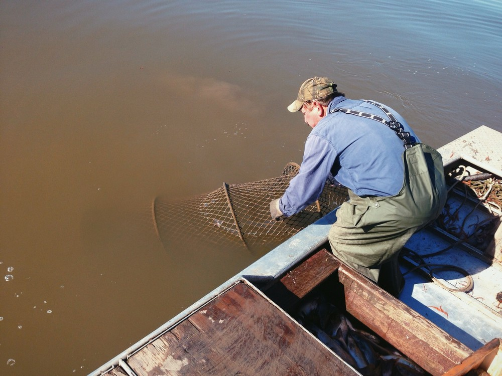 Catfish hoop net fishing with a dying breed of cajun for Hoop net fishing