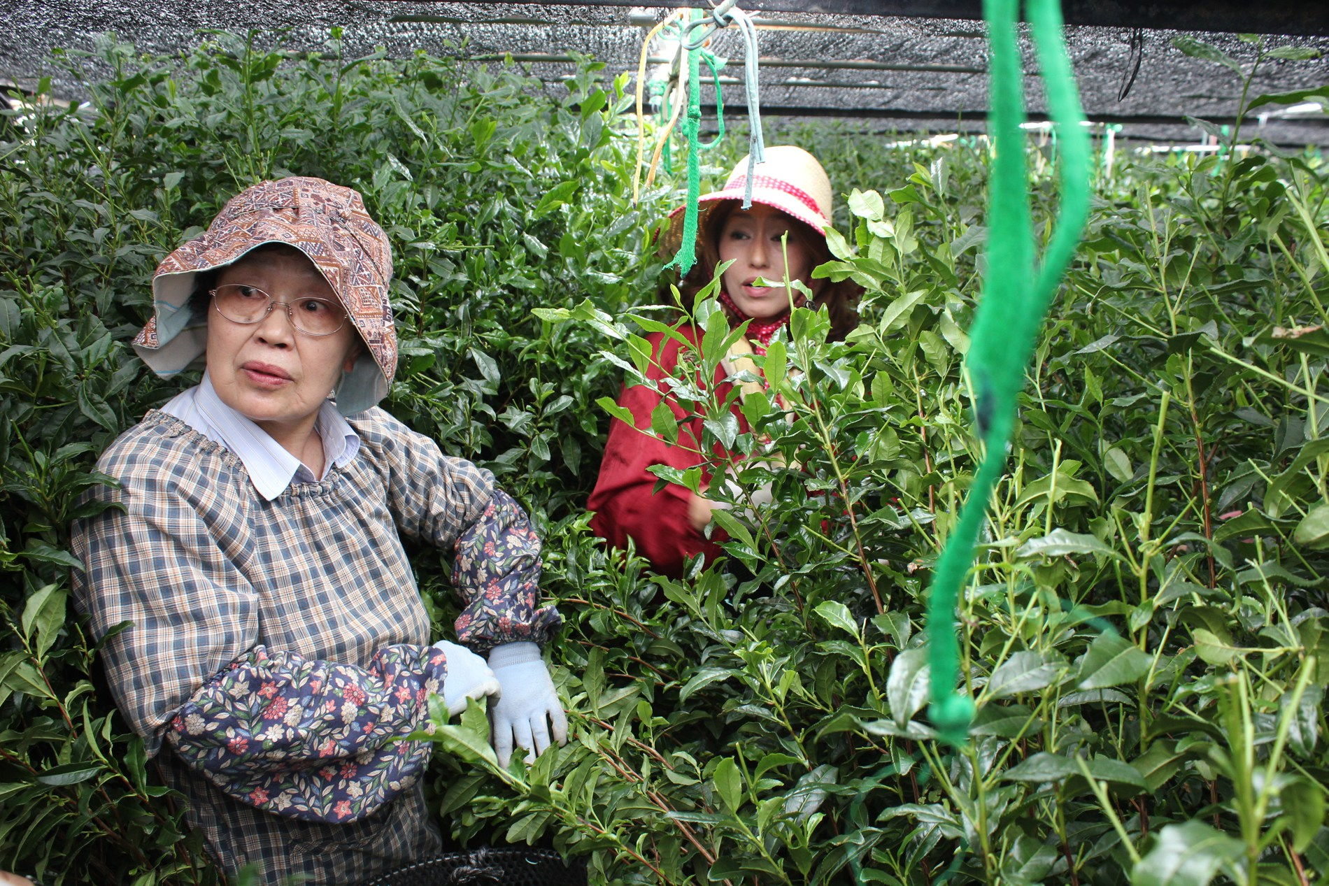 Workers at Matcha Bar's supplier in Nishio. Courtesy of Matcha Bar.