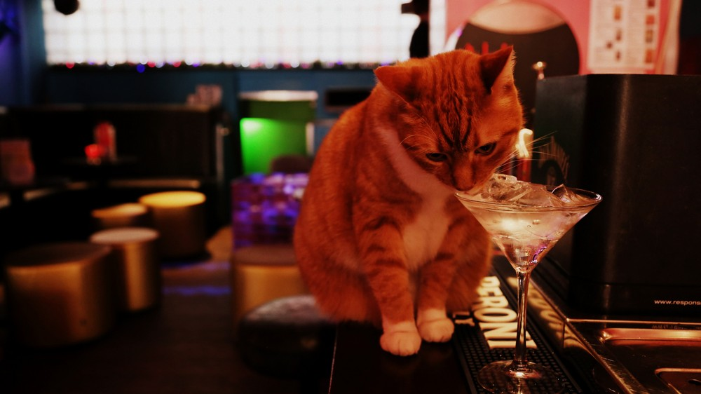 Dog And Cat Drinking Bar